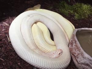 sortie-familles-planet-exotica-groupe-serpen-blanct